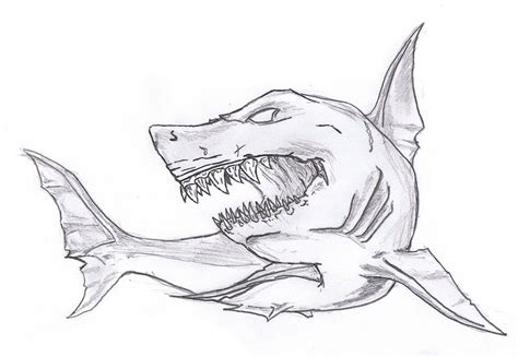 shark sketch by hyperfilthered on deviantart