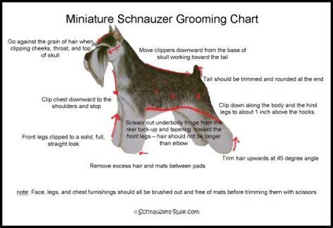 schnauzer hair cut step by step miniature schnauzer grooming chart
