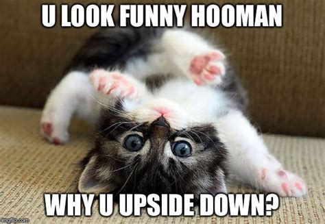 Cute Kittens Memes - cute kittens imgflip