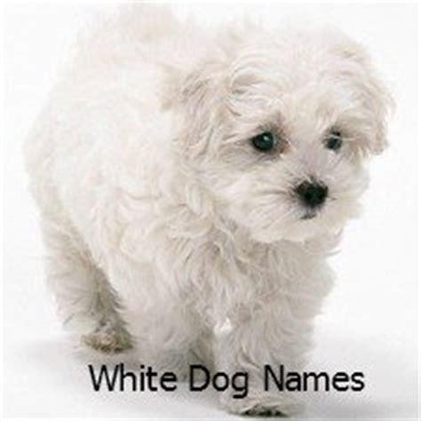 names black white puppies black and white names