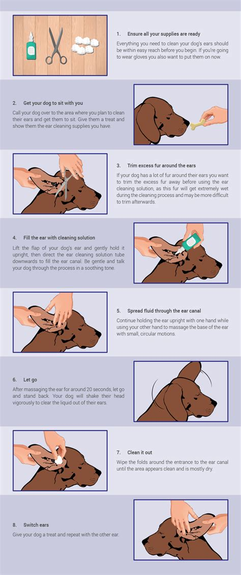 how to clean how to clean your s ears montego