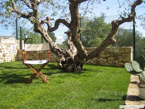giardino con ulivo trulli by v 233 ronique trulli in affitto alberobello e
