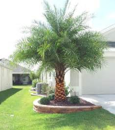 best 25 palm trees landscaping ideas on