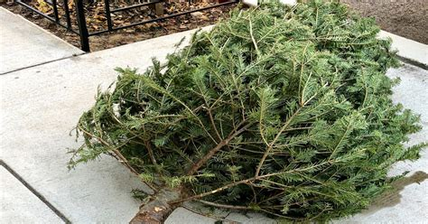 recycle your christmas tree in philly how where and when
