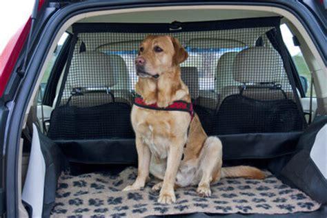 Hundesicherung Im Auto by Mietwagen Mit Hund Sixt Autovermietung