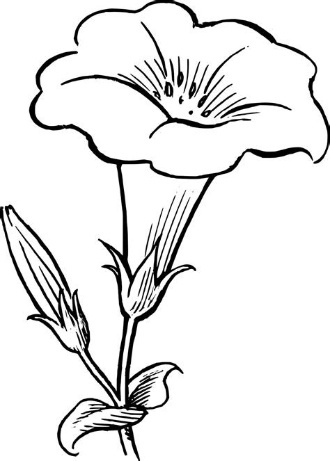black and white coloring pages of flowers coloring flower clipart 58