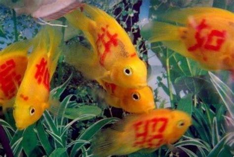 Shoo Pet Shop 奇葩纹身鱼 震惊国外的中国新制造 组图 新浪旅游 新浪网