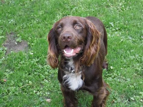 can dogs be proof of how a sprocker can be dogs monthly