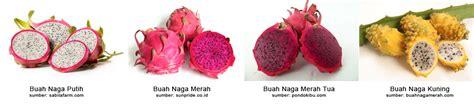 Naga Asam Manis buah naga bedahbuah net