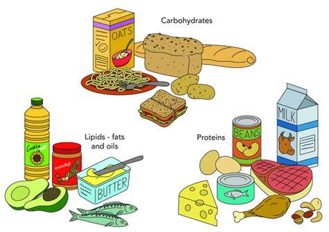carbohydrates lipids and proteins are classified as thunderbolt