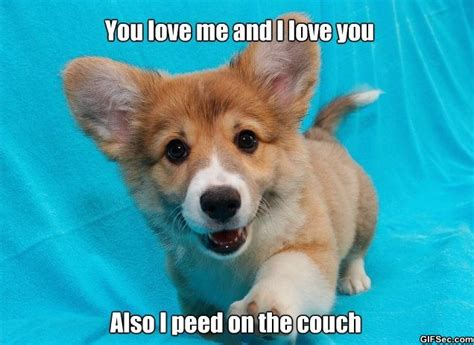 Cute Puppies Meme - funny pictures blog best funny pictures memes and gif