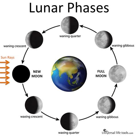 moon phase new moon diagram wiring diagram schemes