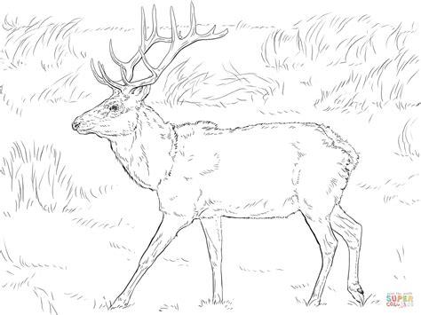 Mule Deer Coloring Page Coloring Home Mule Deer Coloring Page