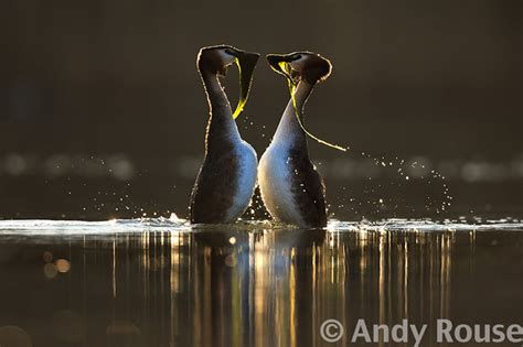 Top Photographers by Top 14 Bird Photographers In The World Their Achievements