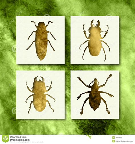different types of bed bugs bugs royalty free stock images image 36653959