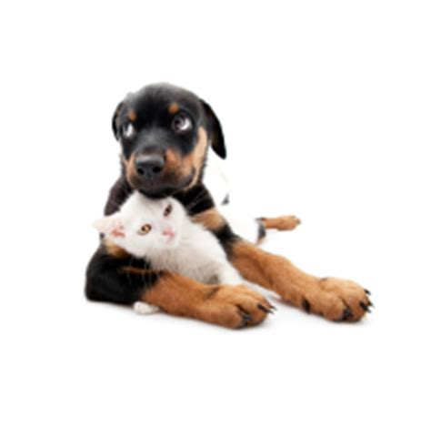 are rottweilers aggressive by nature food aggression how to handle it