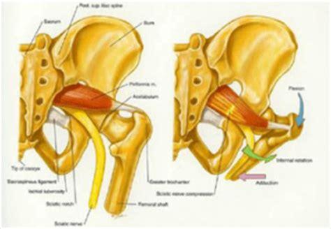 dolori al coccige da seduto muscolo piriforme anatomia e postura