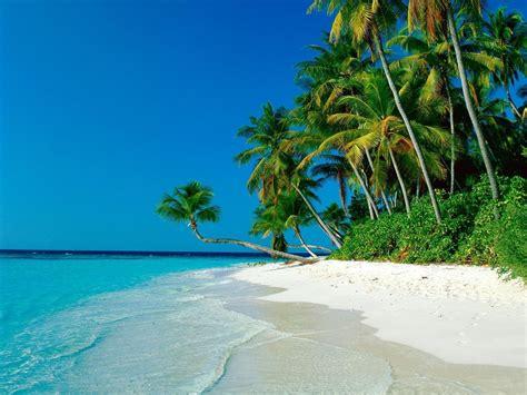 palm tree wallpaper ocean palm trees shore beach wallpapers ocean palm trees