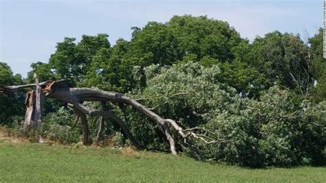 shawshank redemption tree shawshank tree falls cnn