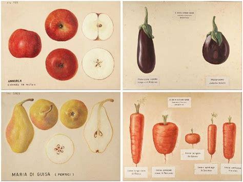 tavole botaniche illustrazione botanica aboutgarden pagina 3