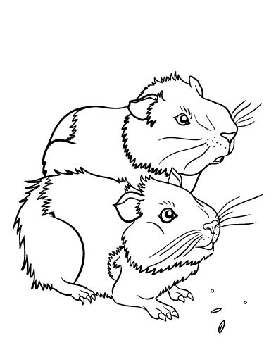 Printable Guinea Pig Coloring Page Free Pdf Download At Guinea Pig Colouring Pages