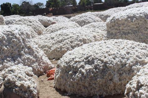 le retour du caton 2357203323 burkina des cotonculteurs en croisade pour le retour du coton bt l actualit 233 du burkina faso