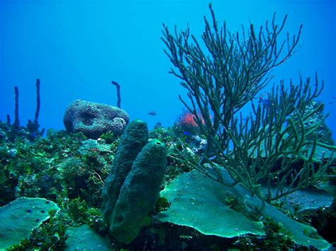 Search For In Jamaica Scuba Diving In Jamaica Search Results Global News Ini Berita