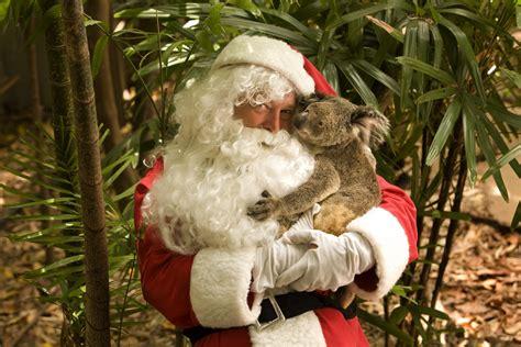 koala nativity around the world swain destinations travel