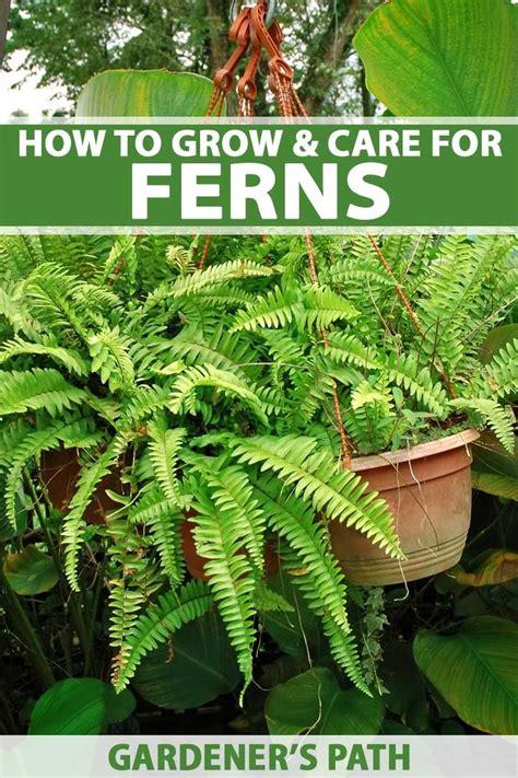 grow ferns add  touch  jurassic park