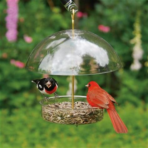 best backyard bird feeders
