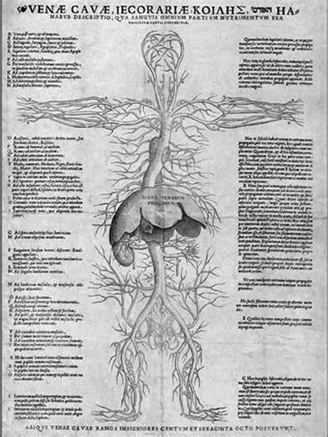 organi interni corpo umano lato sinistro ricerche correlate a organi interni corpo umano sinistra