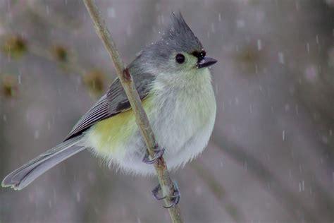 backyard birder one bird two bird three bird more participate in the