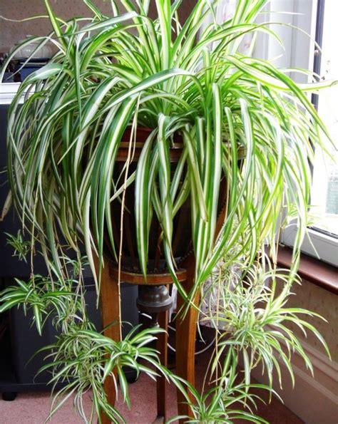 Houseplants For Low Light Areas 12 lindas plantas que podem sobreviver at 233 em ambientes