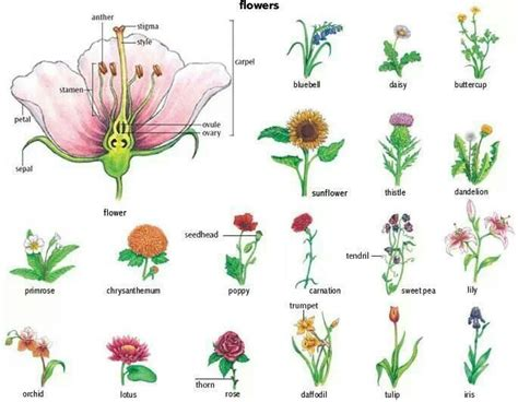 parts of the flower and flower names the outdoors