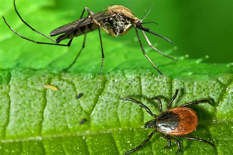 how to control mosquitoes in your backyard how to control mosquitoes in your backyard 13 natural ways to keep mosquitoes away