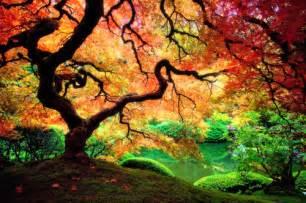 tree colors autumn colors fall magic tree image 42870 on favim
