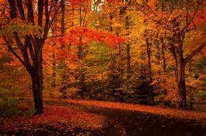 In Fall fall colours ontario related keywords amp suggestions fall colours
