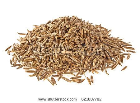 cumin plant stock images royalty free images vectors cumin plant inspired room cumin seeds stock images royalty free images vectors