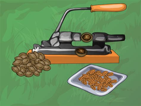Harvest Garden by How To Harvest Pecans 11 Steps With Pictures Wikihow