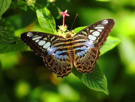 imagenes de flores que parecen animales banco de im 193 genes 30 im 225 genes gratis de paisajes flores