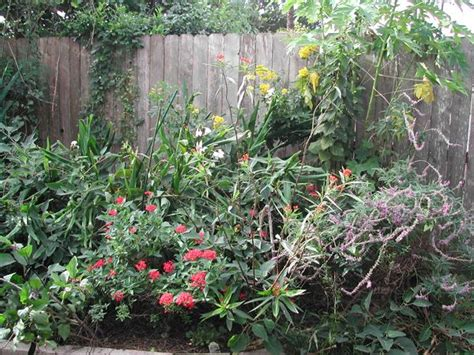 quail valley garden club attracting birds to your backyard