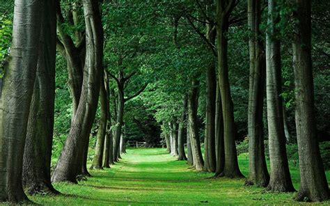 Home   Cobwood Tree Surgery