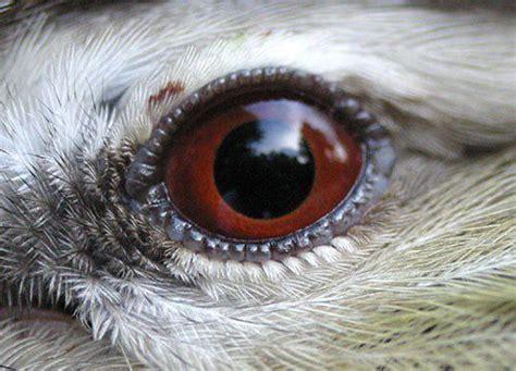 zo ziet de wereld eruit door de ogen van een vogel video