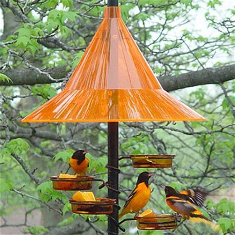 oriole feeders oriole bird feeders for feeding and