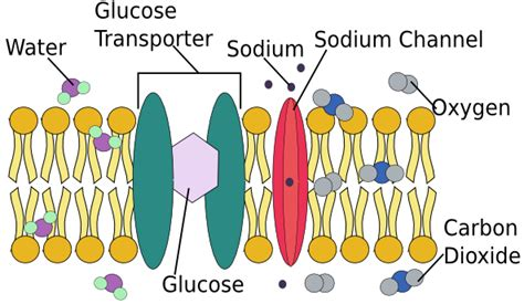 cell membrane functions role structure video