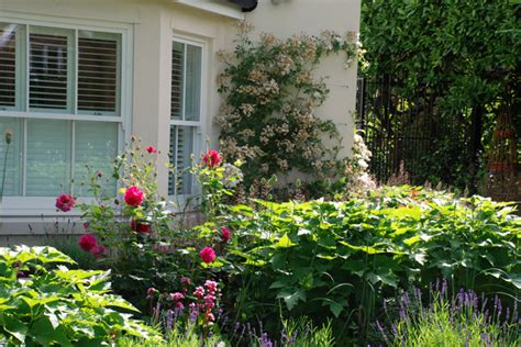 Garden Design Oxshott Lisa Cox Garden Designs Blog | from the drawing board oxshott garden one year on