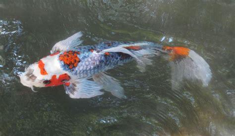 Lukisan Koi Big Myy 12 jeannie s koi leslie b grigsby beadwork