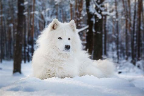 snow dogs names winter names petcha