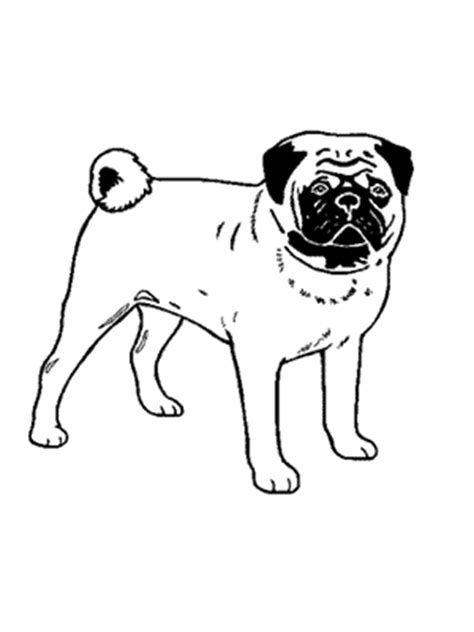mid michigan pug club mpmkc breeder referral and breed resources
