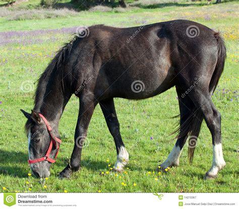 nice hourse nice horse royalty free stock photography image 14270367